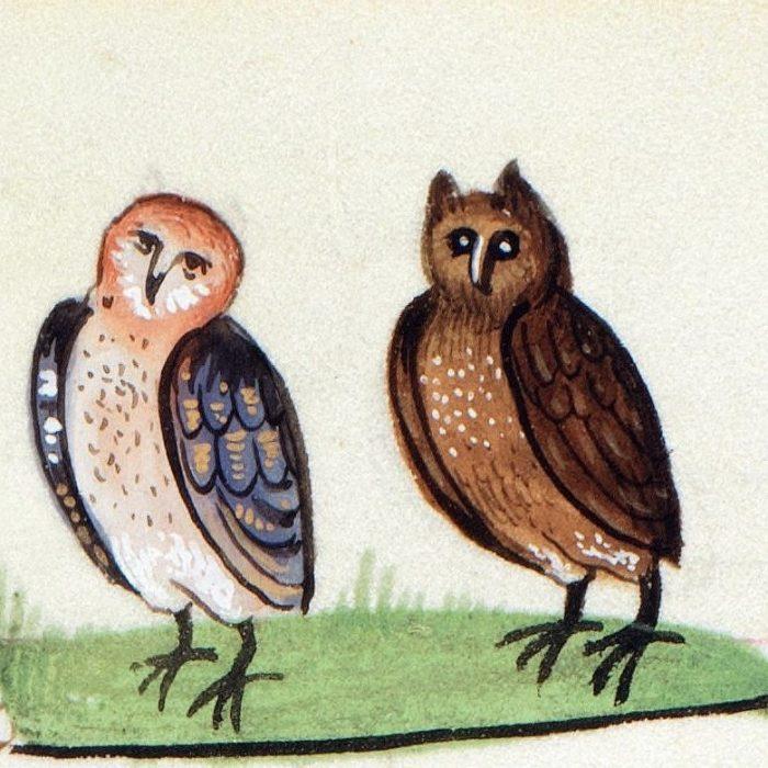 owl-frederick-ii-de-arte-venandi-cum-avibus-bruges-ca-1485-1490